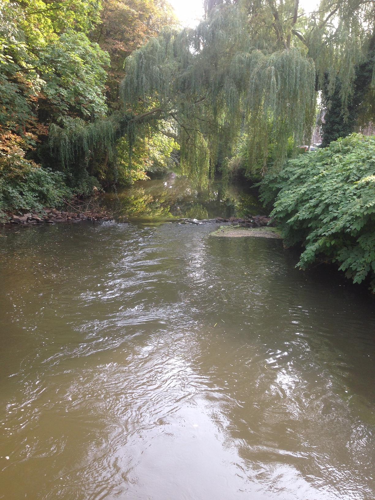 meettehmaker day 16, dommel, natuur, bomen, riviertje, vieuw
